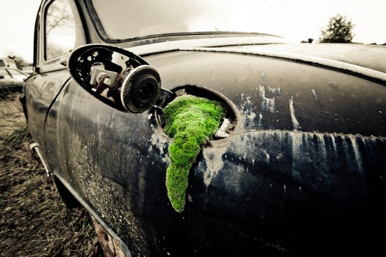 moss growing from a car