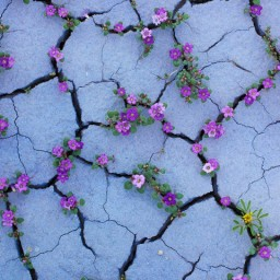 Photography: Plants growing in odd places