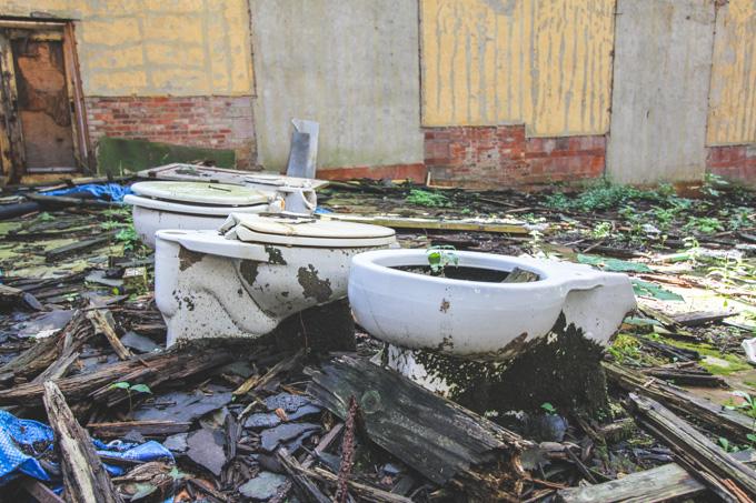 plants in toilets