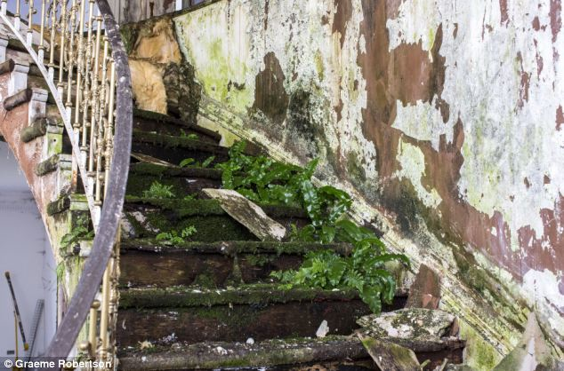 plants on stairs