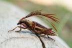 Baffling Beetles
