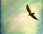 Aqua-birds – A Short Story