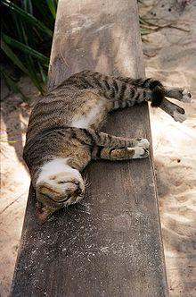 220px-Cat_in_Zanzibar