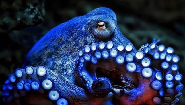 Octopus by Syd Barrett