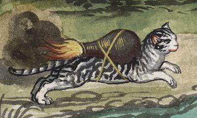 rocket-cat-1