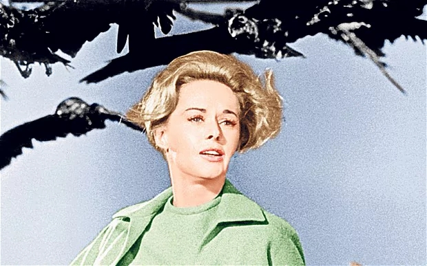 Tippi Hedren in Alfred Hitchcock's The Birds (1963). Photo: Everett Collection/Rex features