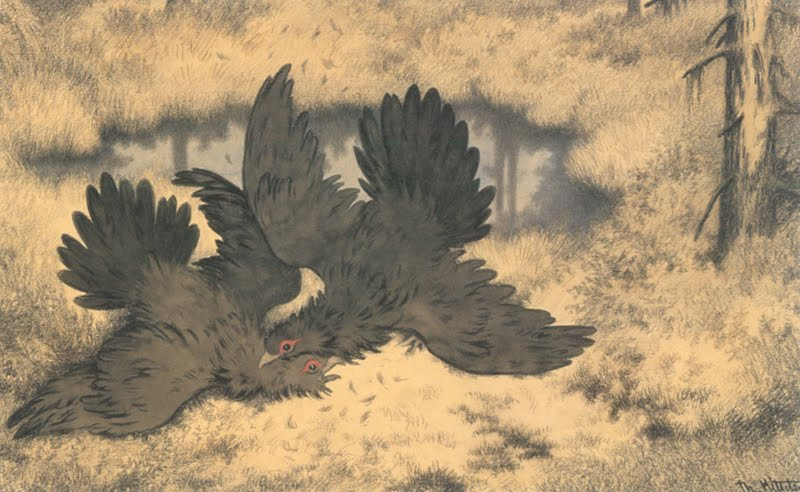 the-troll-birds-go-at-it-hammer-and-tongs-troldfuglen-basker-og-slaaes-derinde-1900